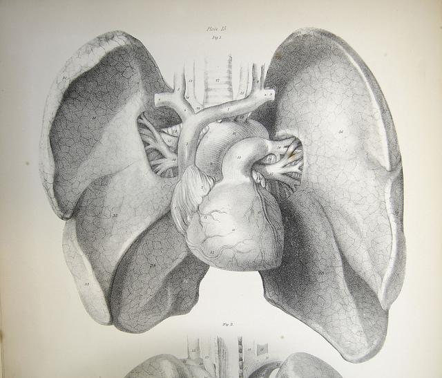 Drawing of Human Organs