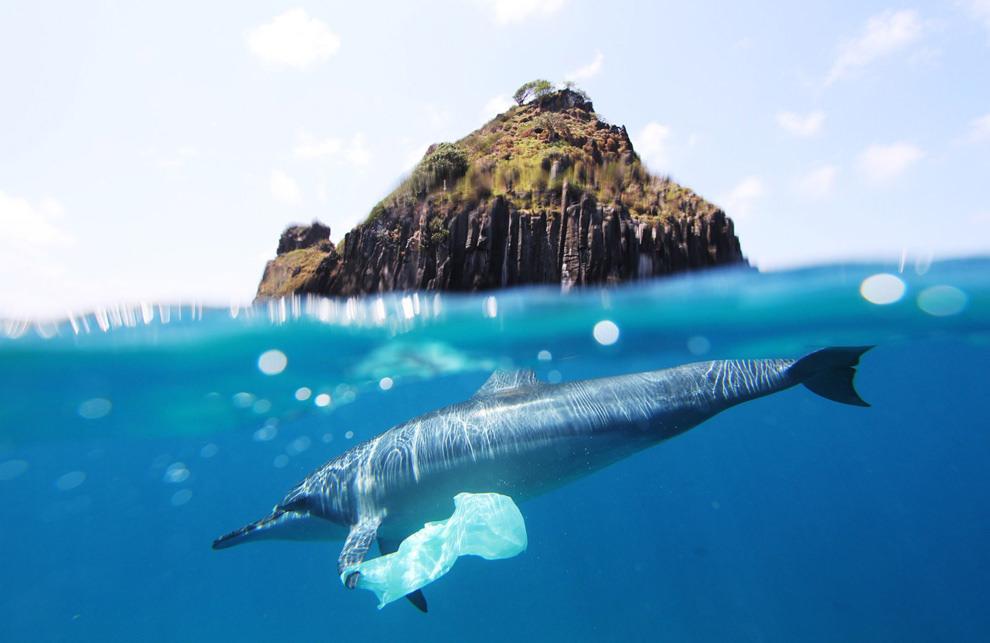 plastic dolphin