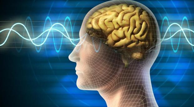 empathy brain